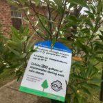 soul tree planting 2