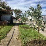 soul tree planting 5
